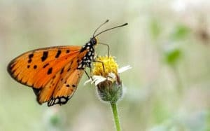 Citizen Scientists Continue to Boost Valuable Ecological Research